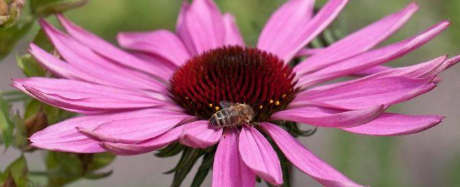 Lezing over bijen tijdens Vriendenavond