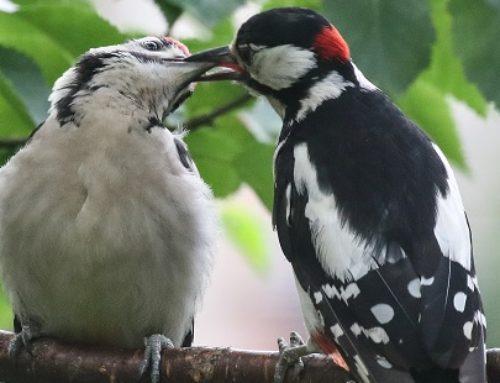 Vriendenavond 2018 vol bijzondere vogels