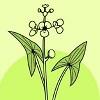 Costerustuin Logo