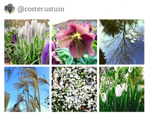 Costerustuin op Instagram en Tumblr