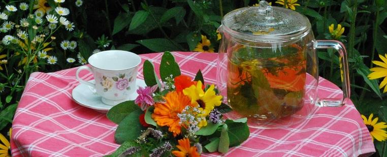 Proef de planten tijdens de Costerustuin High Tea