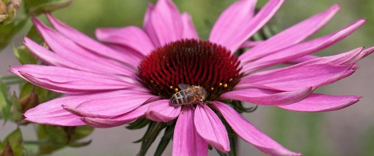 Bijenlezing tijdens Vriendenavond op 28 oktober