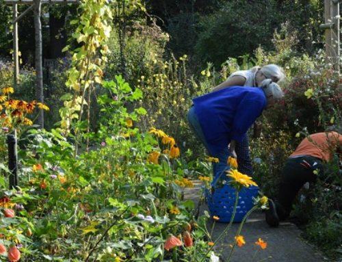 Kom naar de Plantuitgiftedag op 7 oktober!