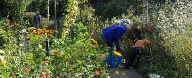 Plantuitgiftedag in de Costerustuin
