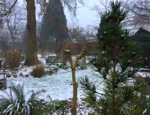 De Costerustuin wenst u een schitterend tuinjaar 2019 toe!