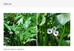Plantencollectie Costerustuin