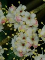 mei_2009_19c_groot.jpg